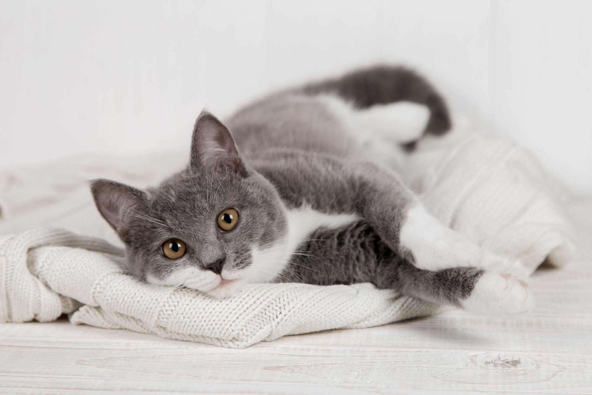 Ahhoz hogy cicád egészséges legyen elengedhetetlen a jól megválasztott macskatáp