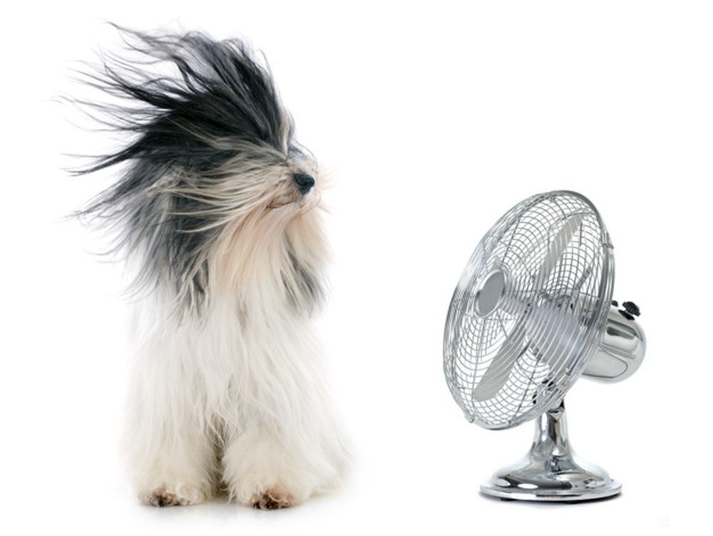 Kutya hűsöl a ventilátornál