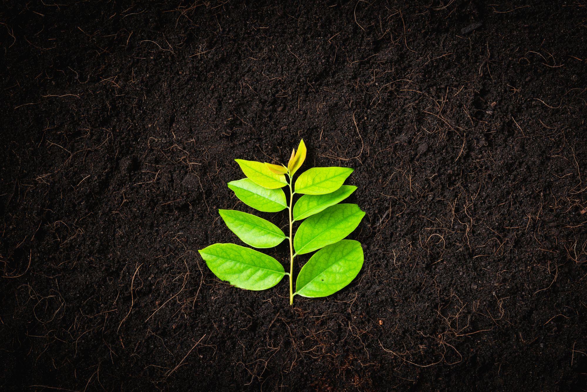 Zöld növény barna földön